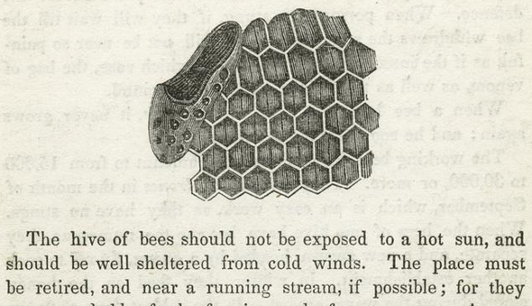 Textbook page with a diagram of honeycomb.