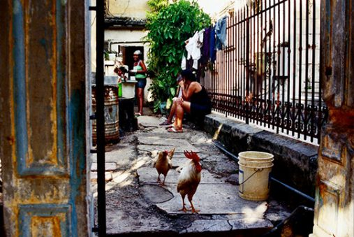 Women doing laundry with roosters in the foreground.
