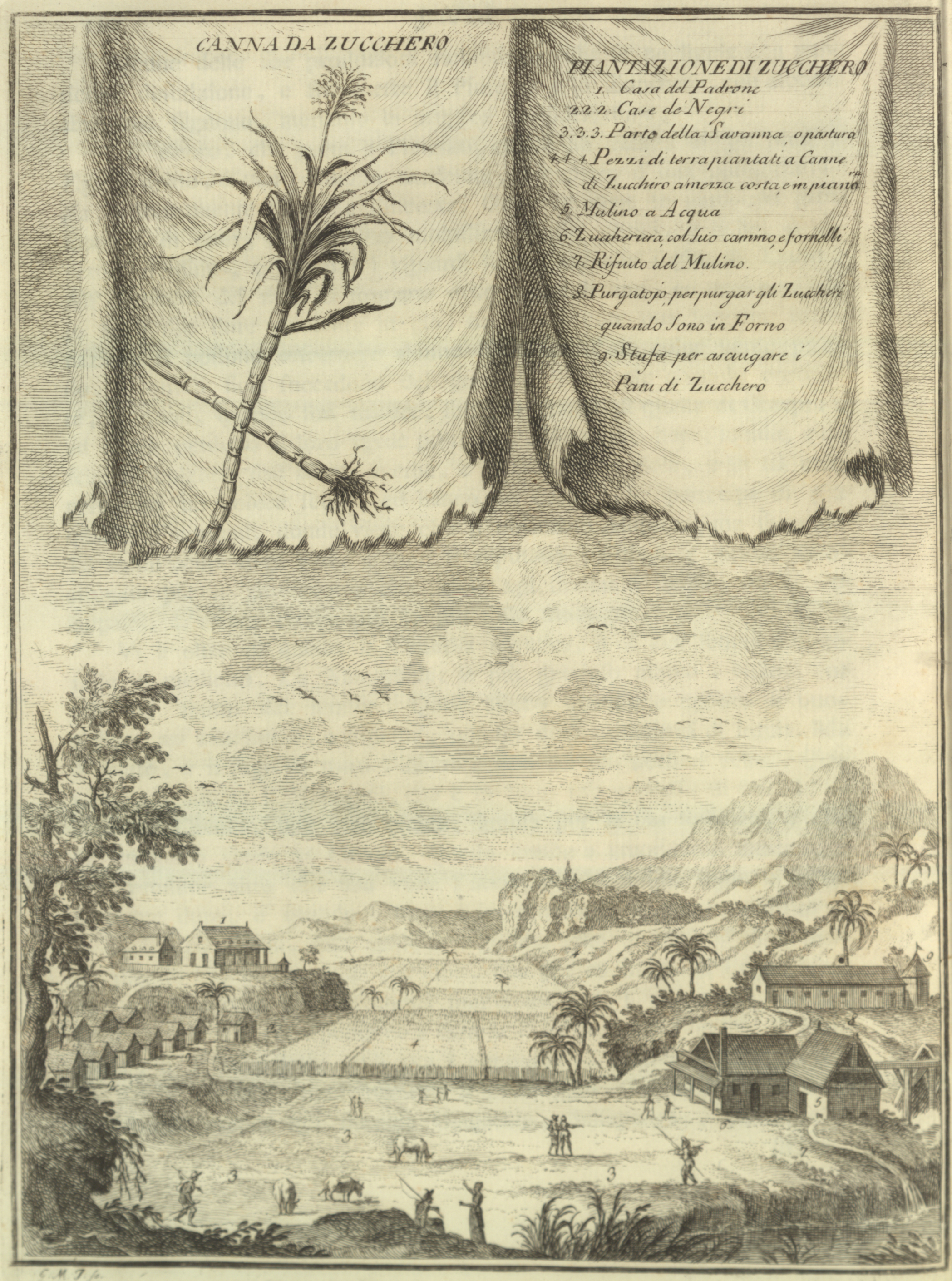 Drawing of a sugar plantation