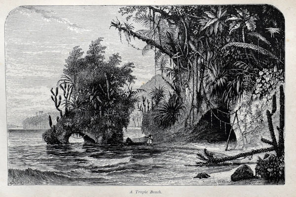 drawing of a rocky shore