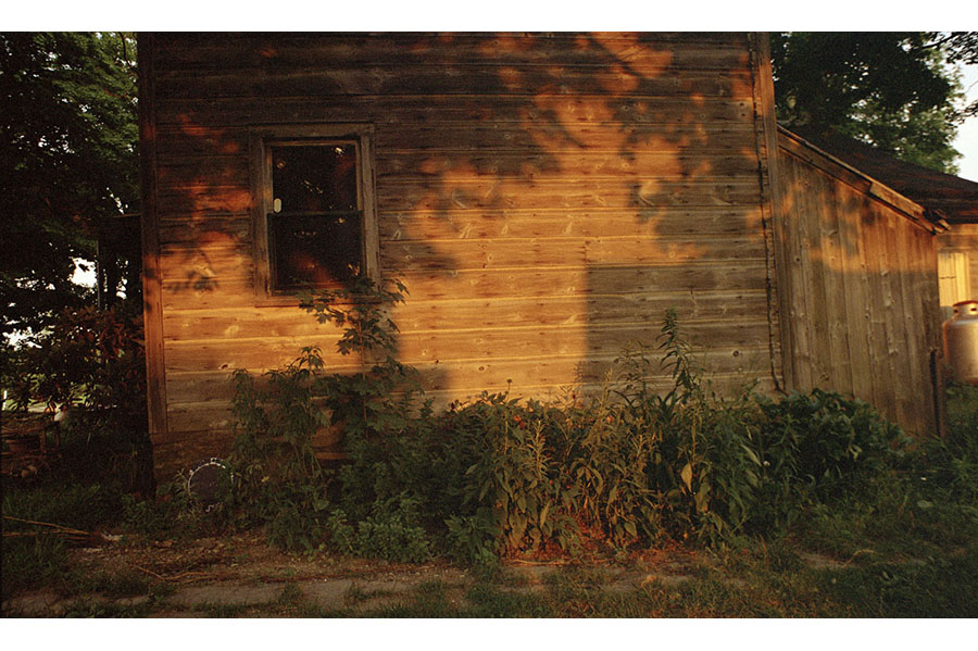 The shadow of tree leaves on the wooden side of a house.