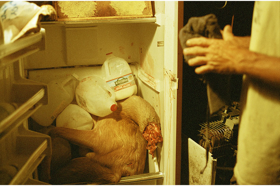 Interior of a fridge containing gallons of milk and an animal.