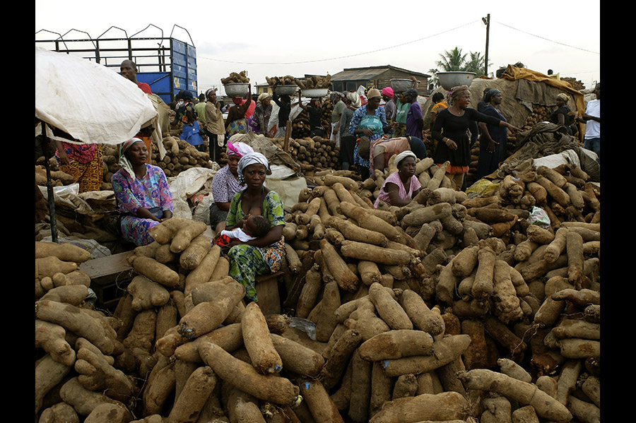 A group of people harvesting from large piles of yams.