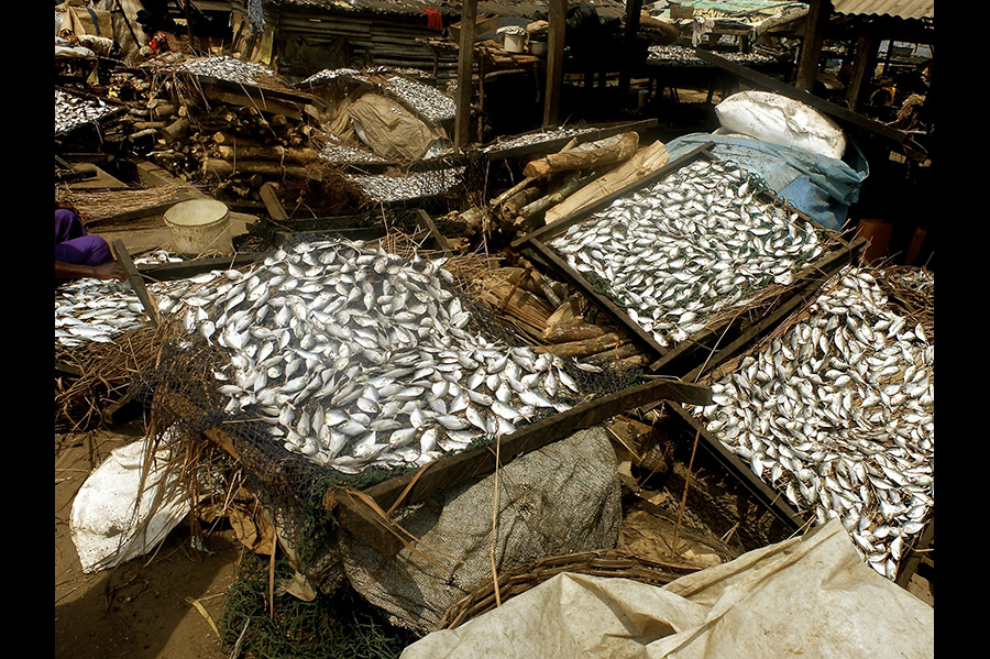 Piles of fish stored in a warehouse room.